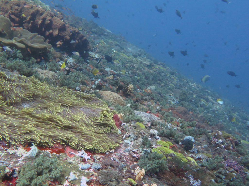 hele-sterke-stroming-maar-prachtig-gamat-bay-nusa-lembongan-indonesie