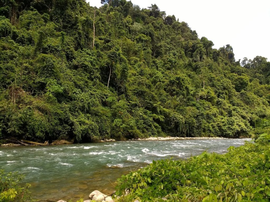 Bukit Lawang jungle
